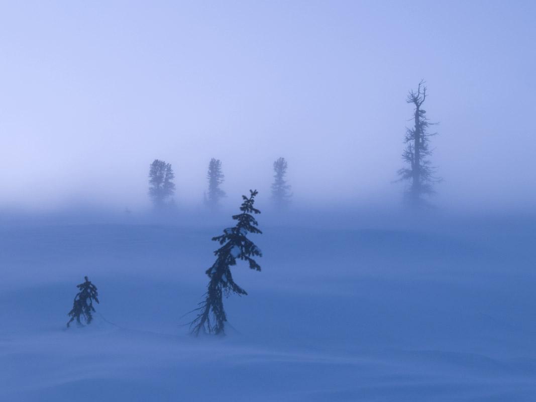 Снег залепляет глаза Вьюга лютым зверем воет в ночи Холод руки цепью сковал...