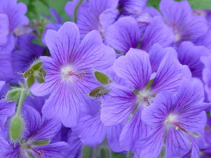 Показать комнатные цветы в картинках 6