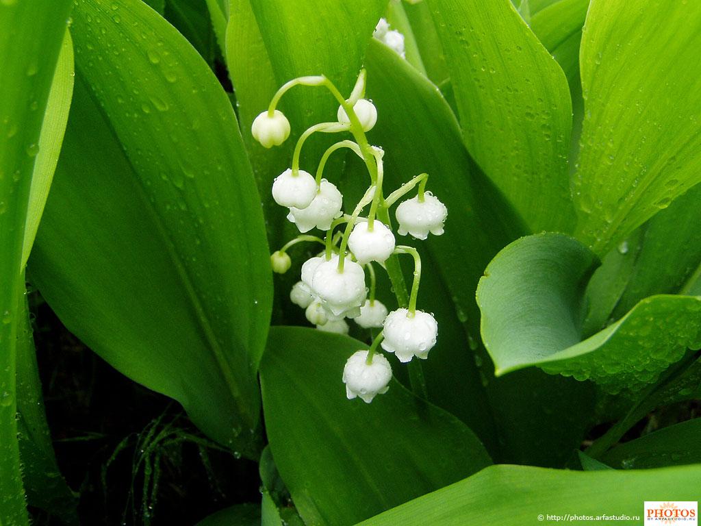 Картинки первых весенних цветов 5