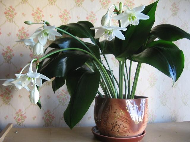 ПРОДАМ / КУПЛЮ цветочные растения.