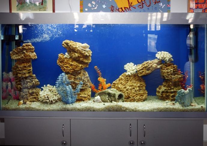 Микрозориум - аквариумные растения и...