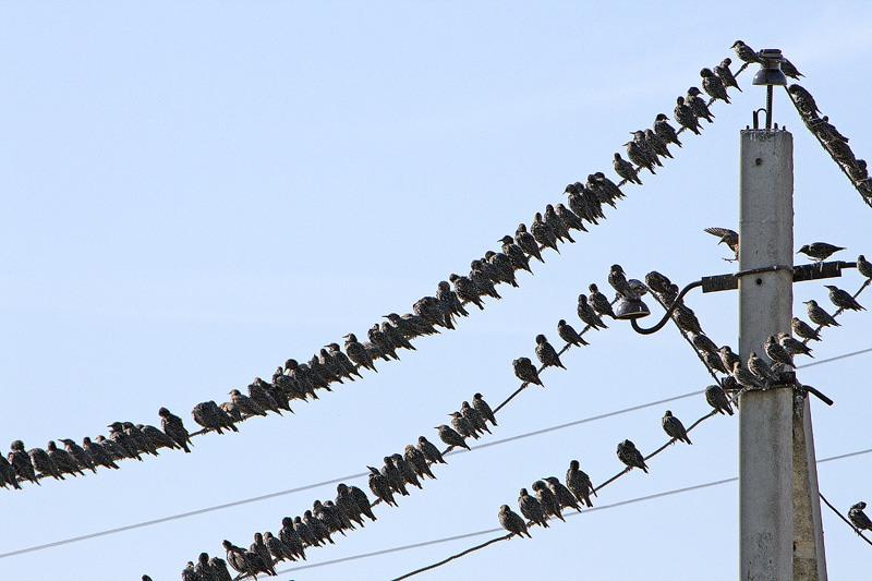 Смотрите и еще птици в дар и птица