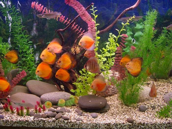"Picture 211  "" Аквариумные рыбки Аквариум."