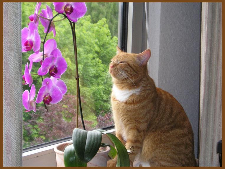 Зачем человеку, умеющему оценить красоту Орхидеи, зачем ему - терпеть в своем...